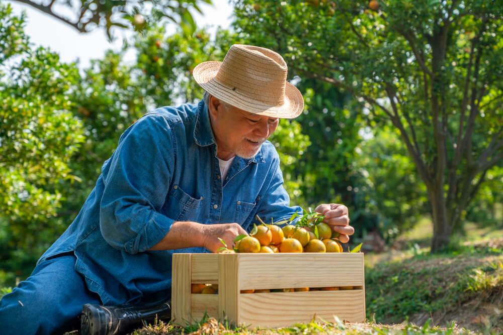 tipos de aposentadoria do inss: aposentadoria rural por idade
